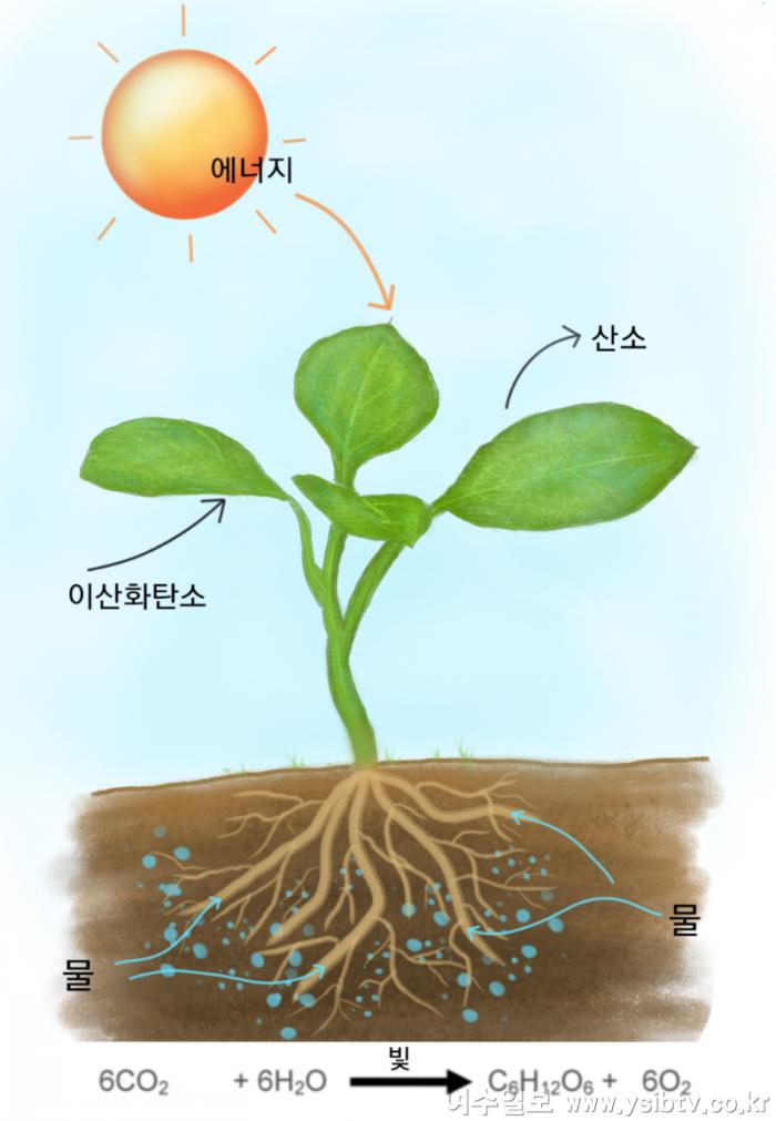 1-1농사는자연이다광합성.png