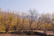 구례 산수유꽃 축제, 노란 봄꽃이 가득하다! 봄이 가득하다!