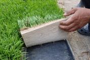안전한 먹거리 생산 '동명네 농사법'